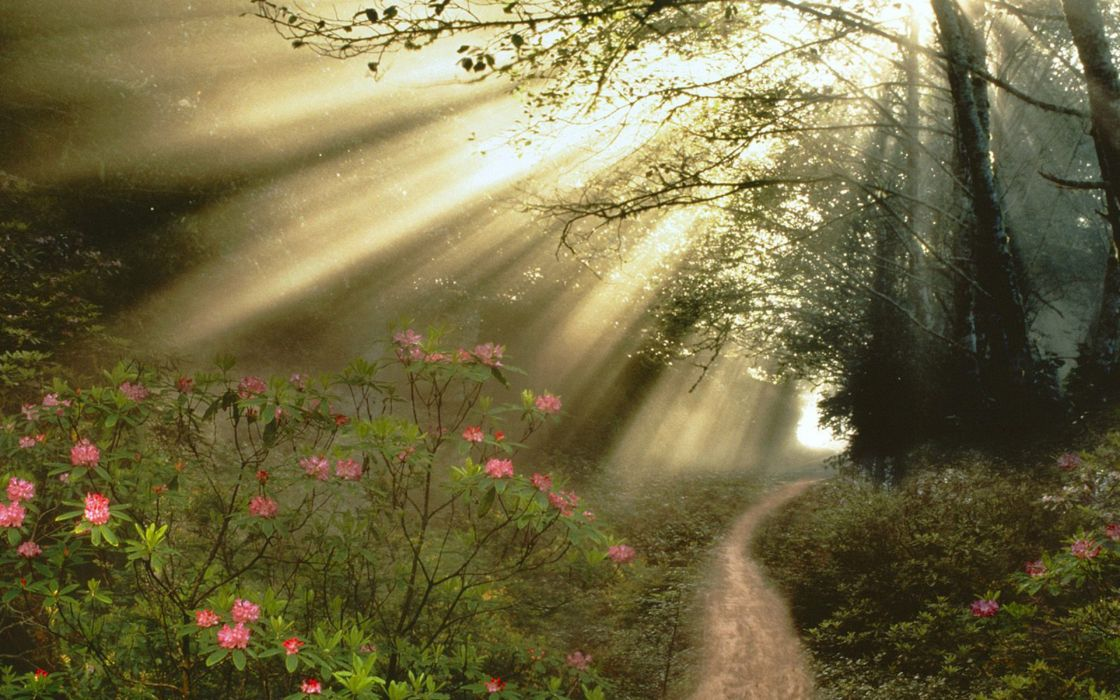 forest flowers sunlight beams rays trail wallpaper