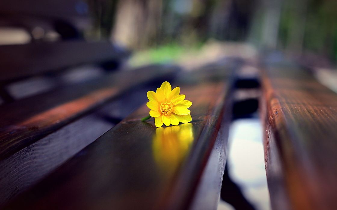 macro bench flowers yellow wallpaper