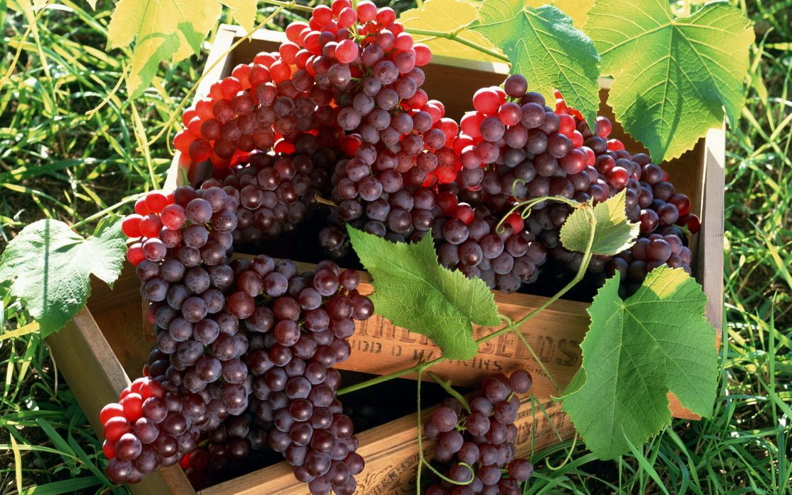 fruit grapes wallpaper