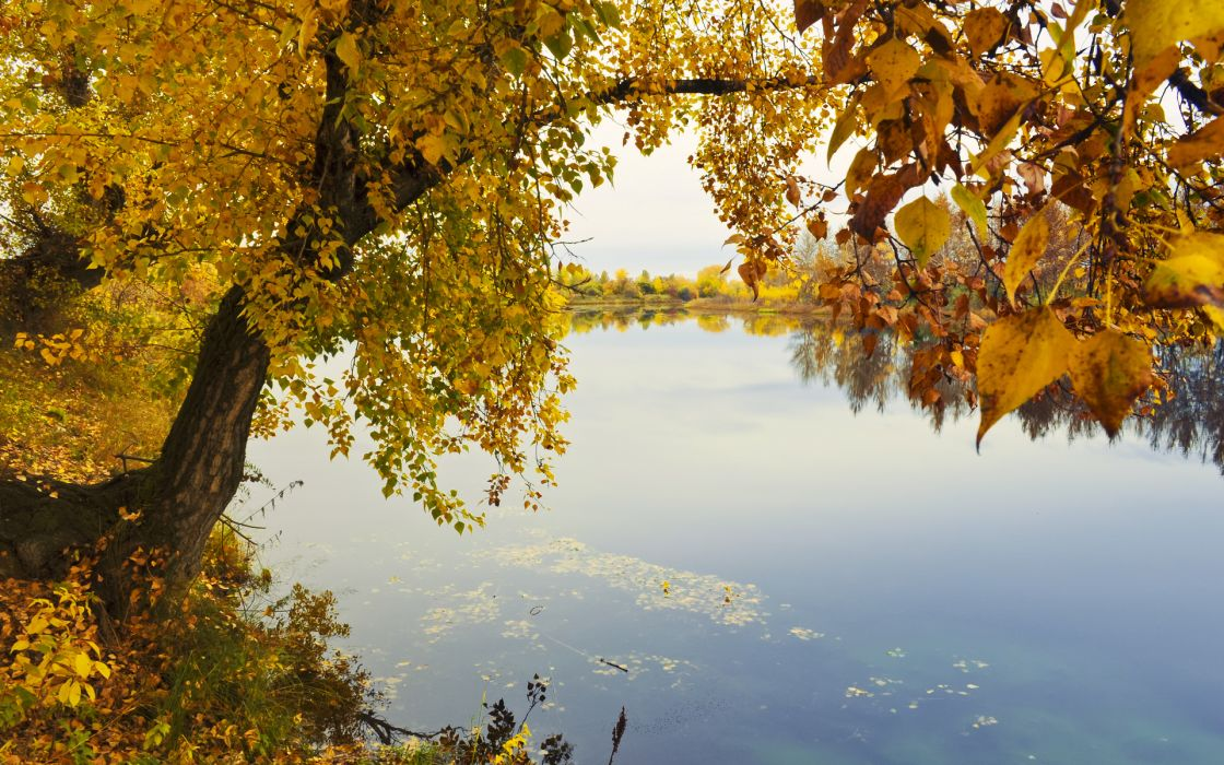 reflection trees leaves autumn fall wallpaper