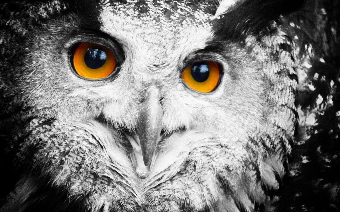 owl face eyes wallpaper