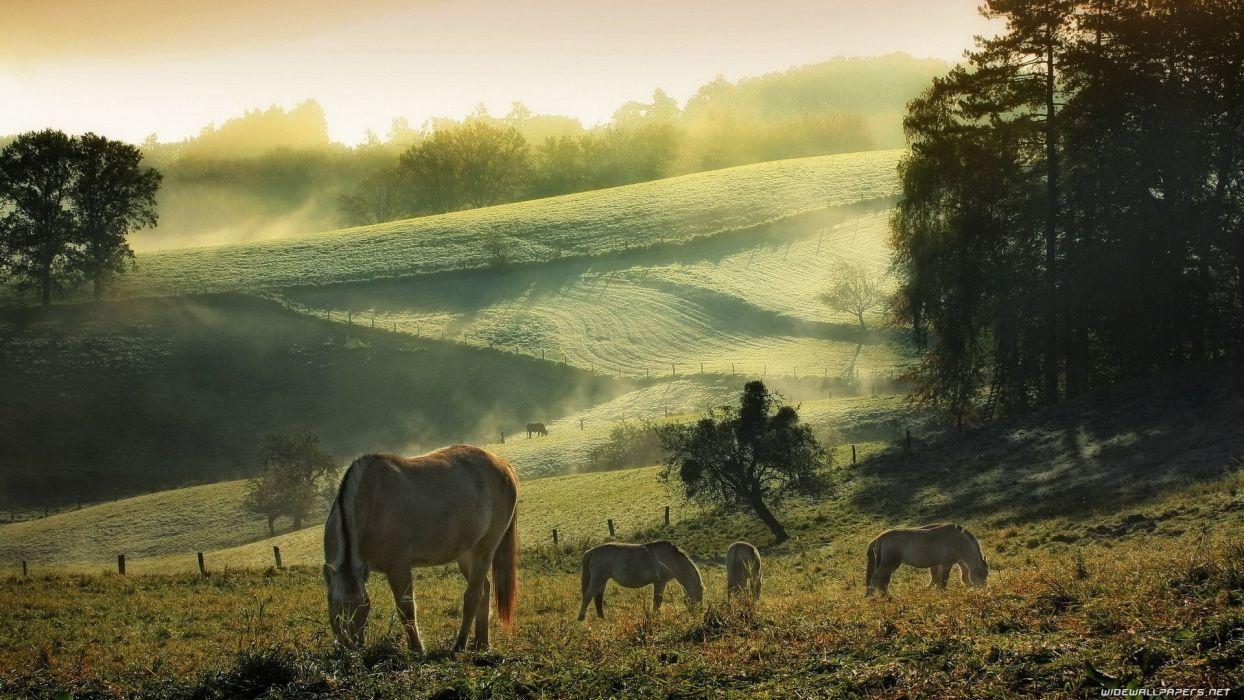 horses landscapes fig sunrise nature wallpaper