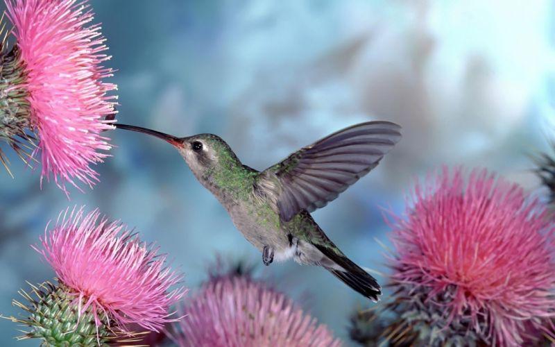 birds wildlife hummingbirds cactus flowers wallpaper