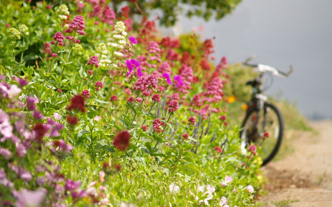 bicycle vehicles macro spring wallpaper