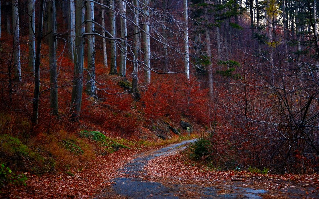 forest autumn fall leaves road wallpaper