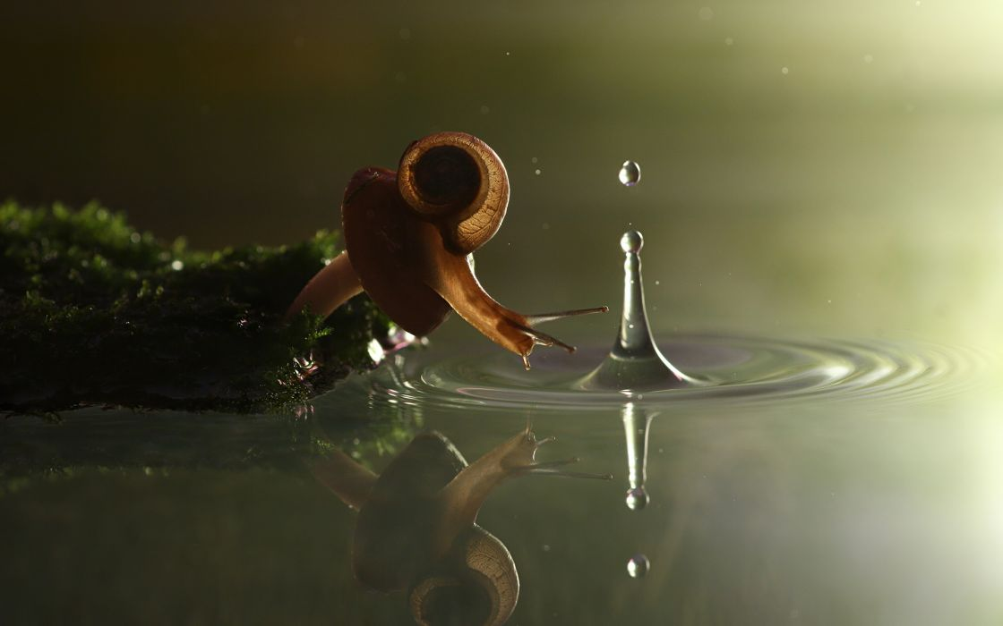 nature snail drops wallpaper