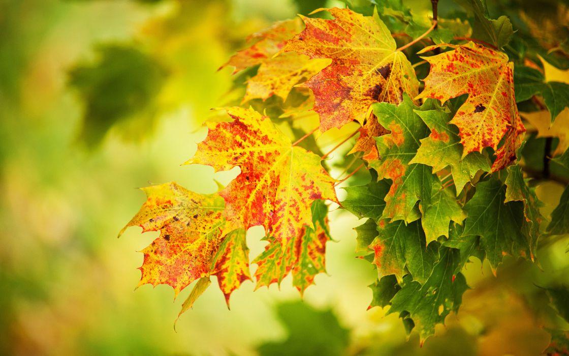 trees autumn fall wallpaper