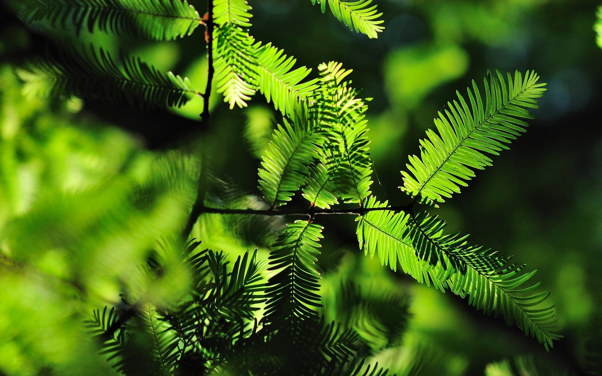 лес зелень ветви  № 2801165 бесплатно