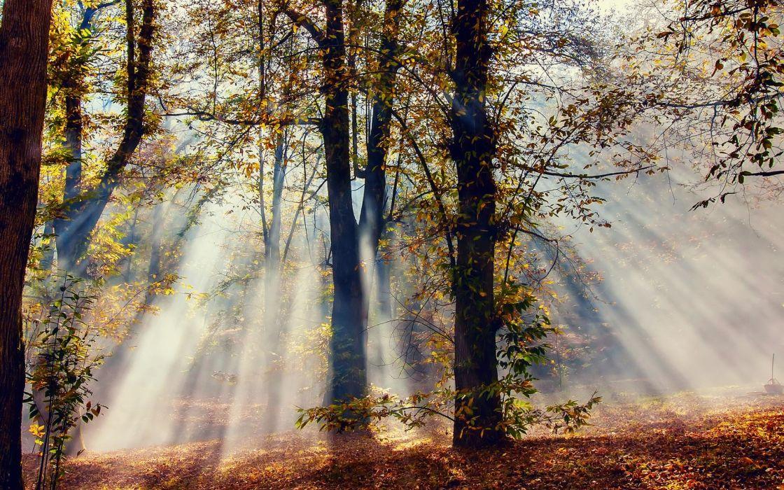 light sun beams ray autumn fall wallpaper