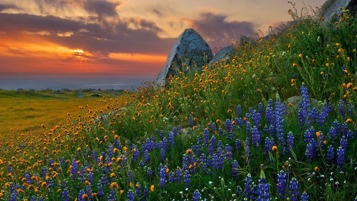 flowers sunset sky wallpaper