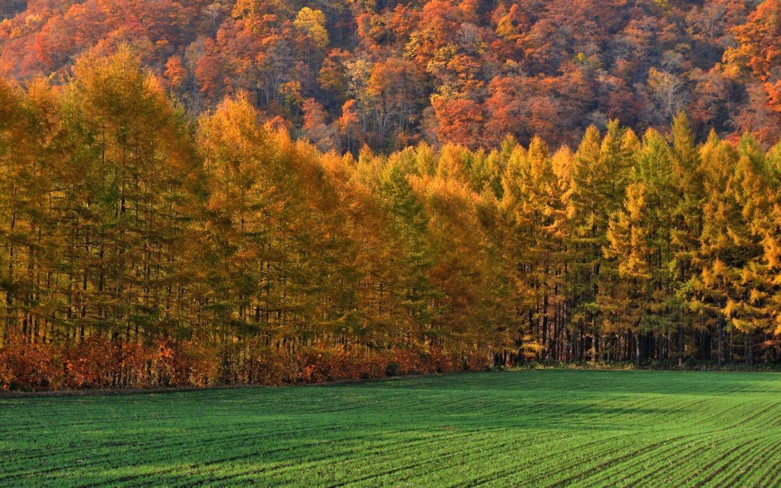 trees autumn fall leaves wallpaper