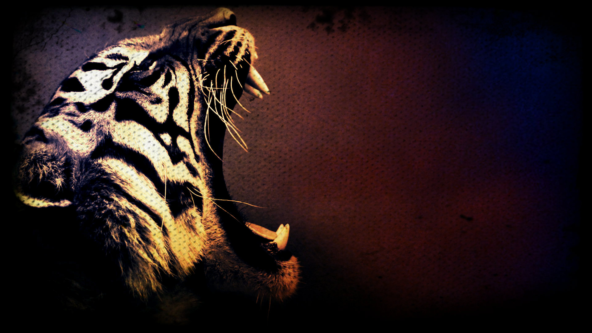 Tiger Art Wallpaper 1920x1080 29329 Wallpaperup