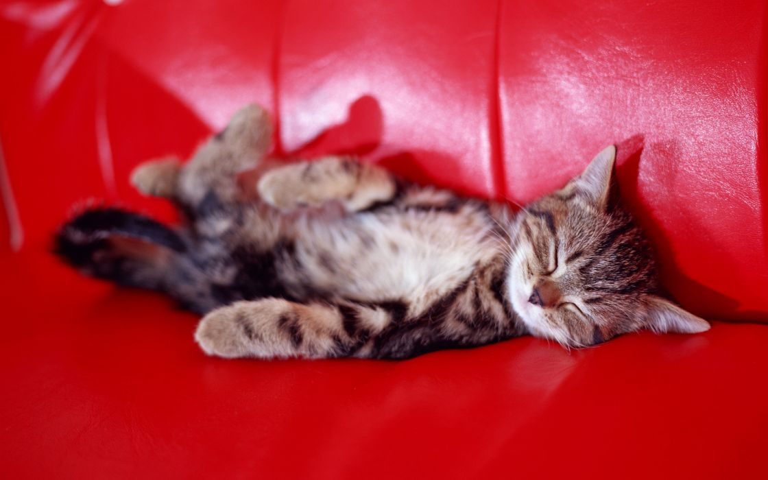 kittens wallpaper