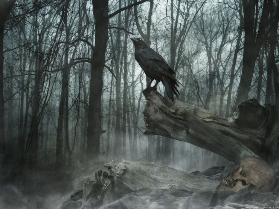 poe the crow raven gothic trees darl mood wallpaper