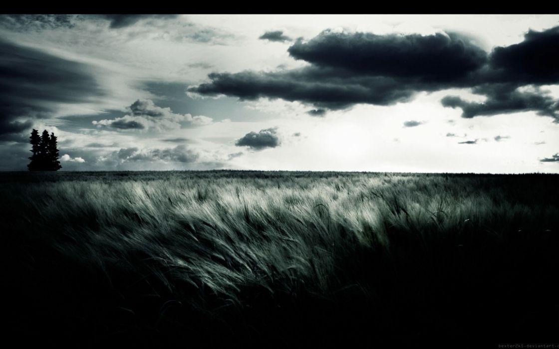 wheat grass tree sky mood wallpaper