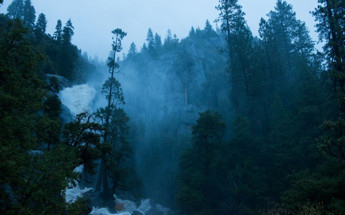 trees forest jungle fog drops mountains wallpaper