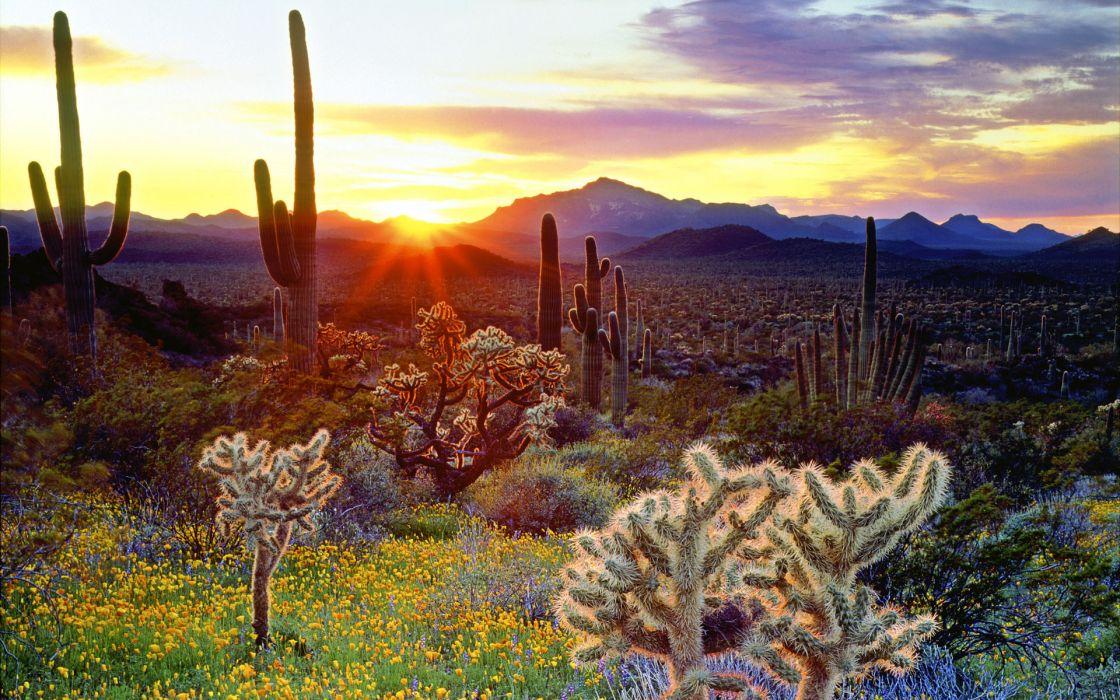 cactus landscapes sunset wallpaper