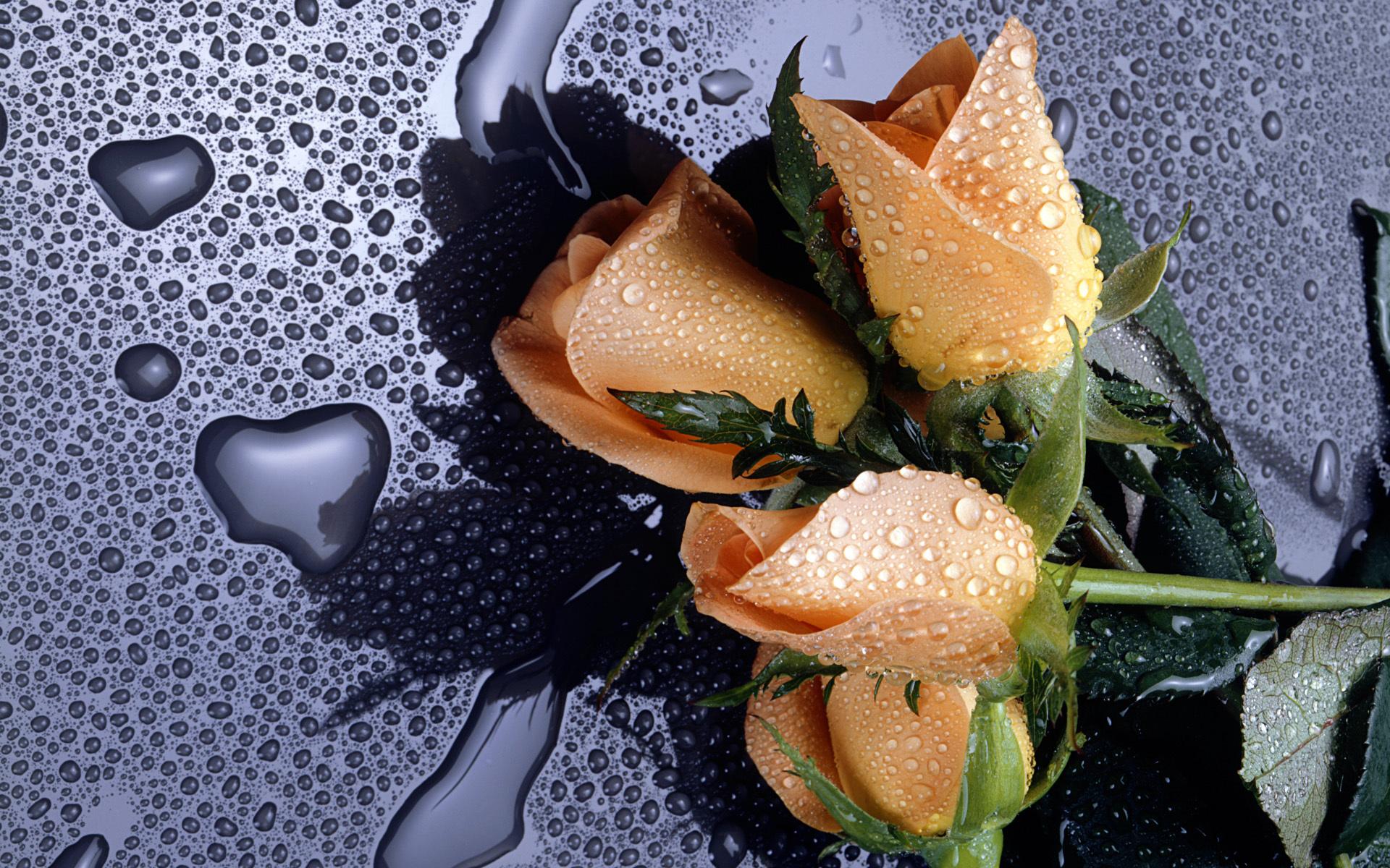роза сердце капли  № 1395902 бесплатно
