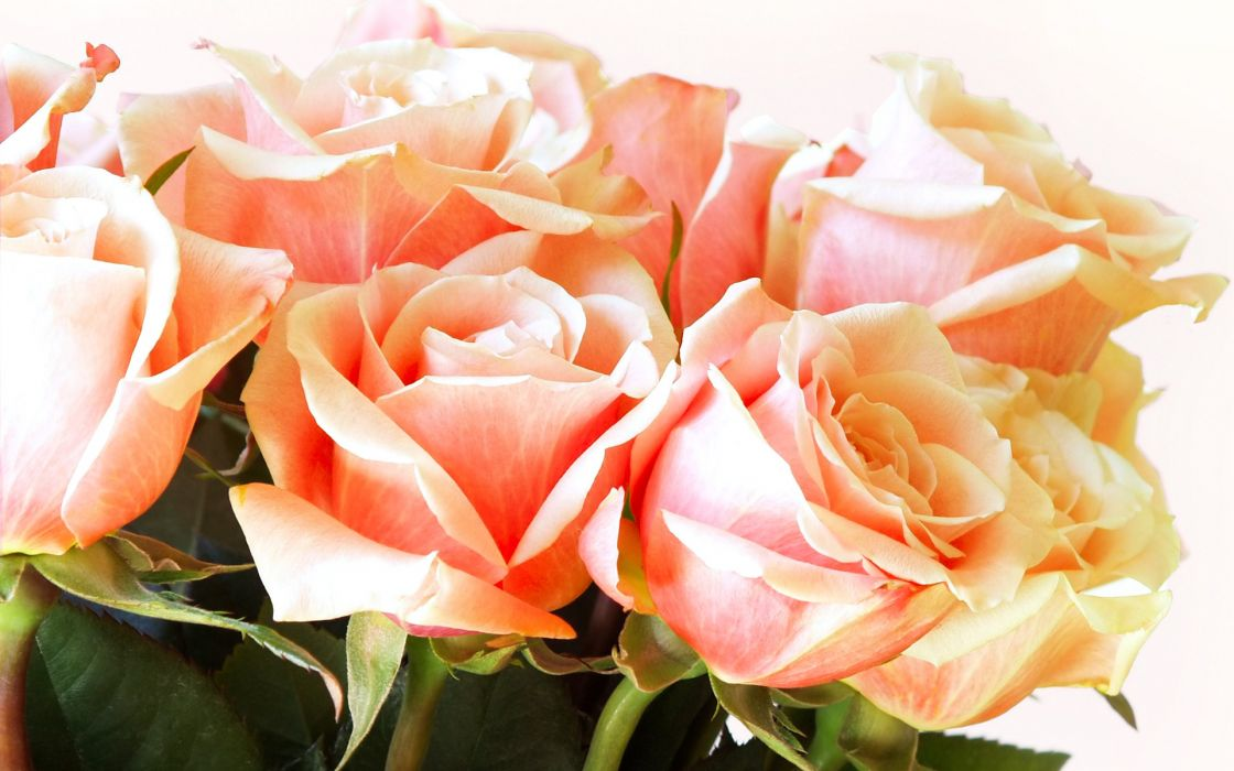 bouquet valentine wallpaper