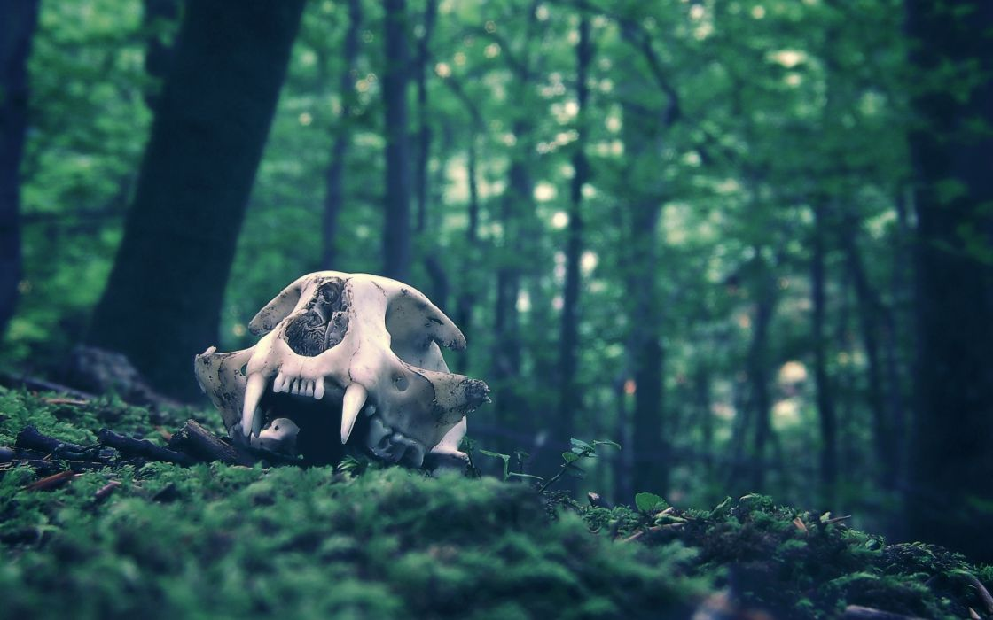 dark skull fangs trees forest wallpaper