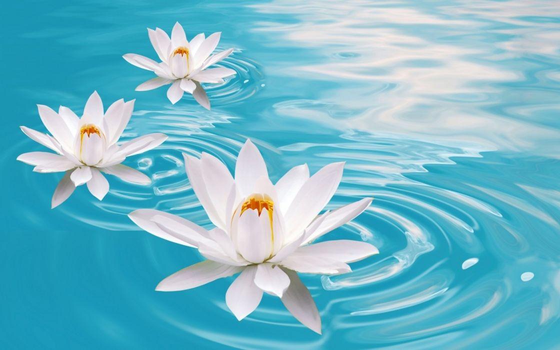 Bokeh Mood Zen Flowers Water Relax Wallpaper