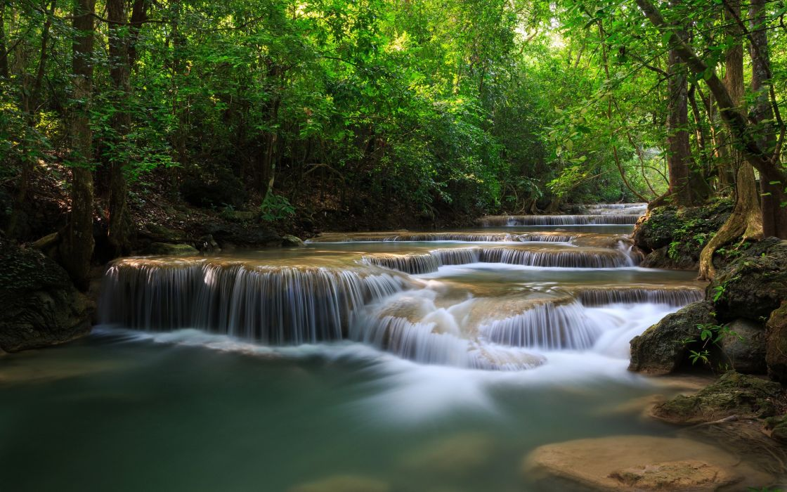 rivers trees forest wallpaper