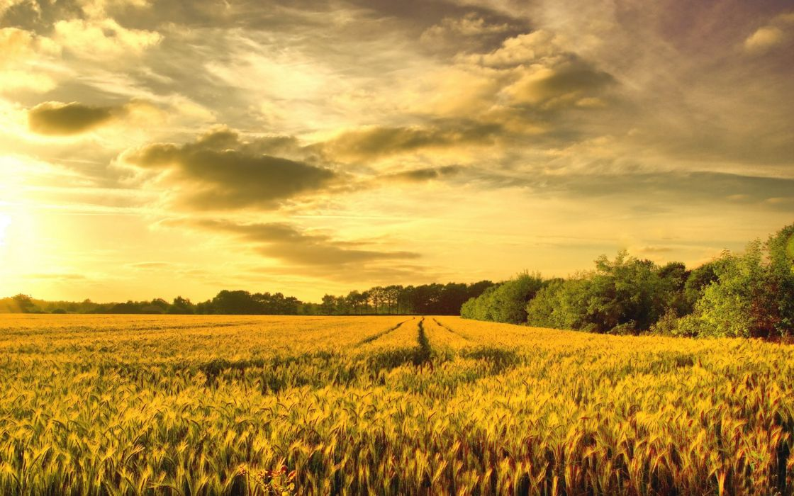 grass wheat sky sunrise sunset wallpaper