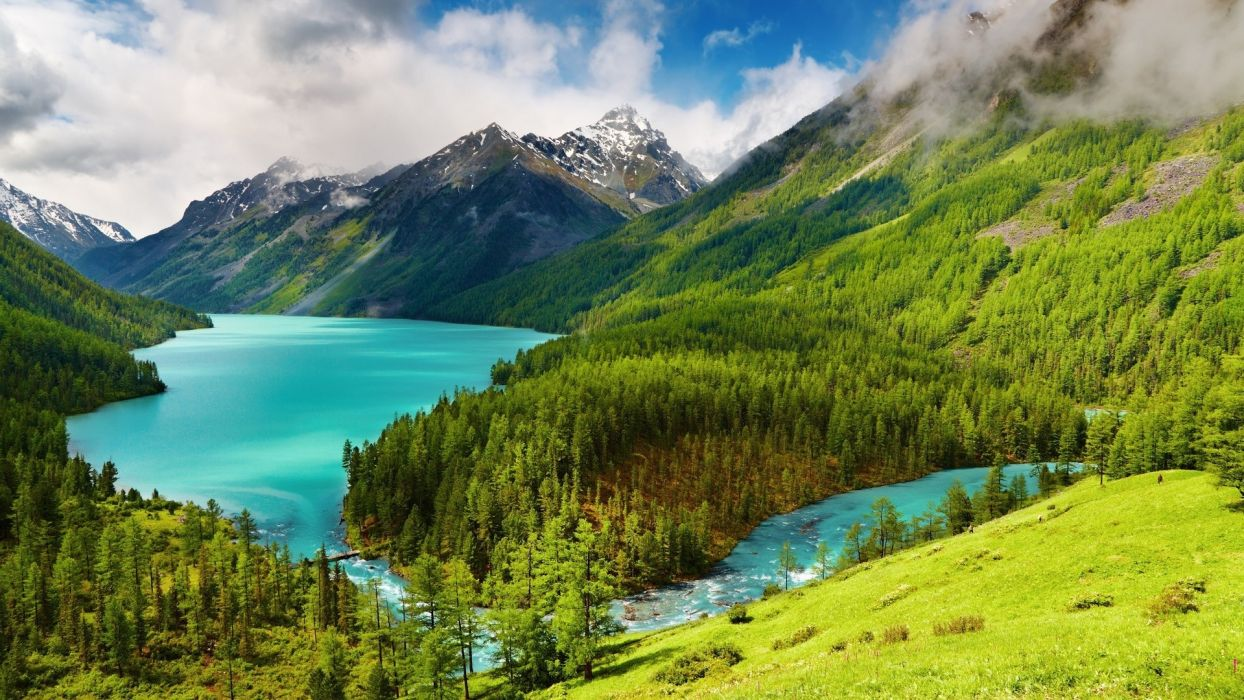 trees forest mountains sky wallpaper