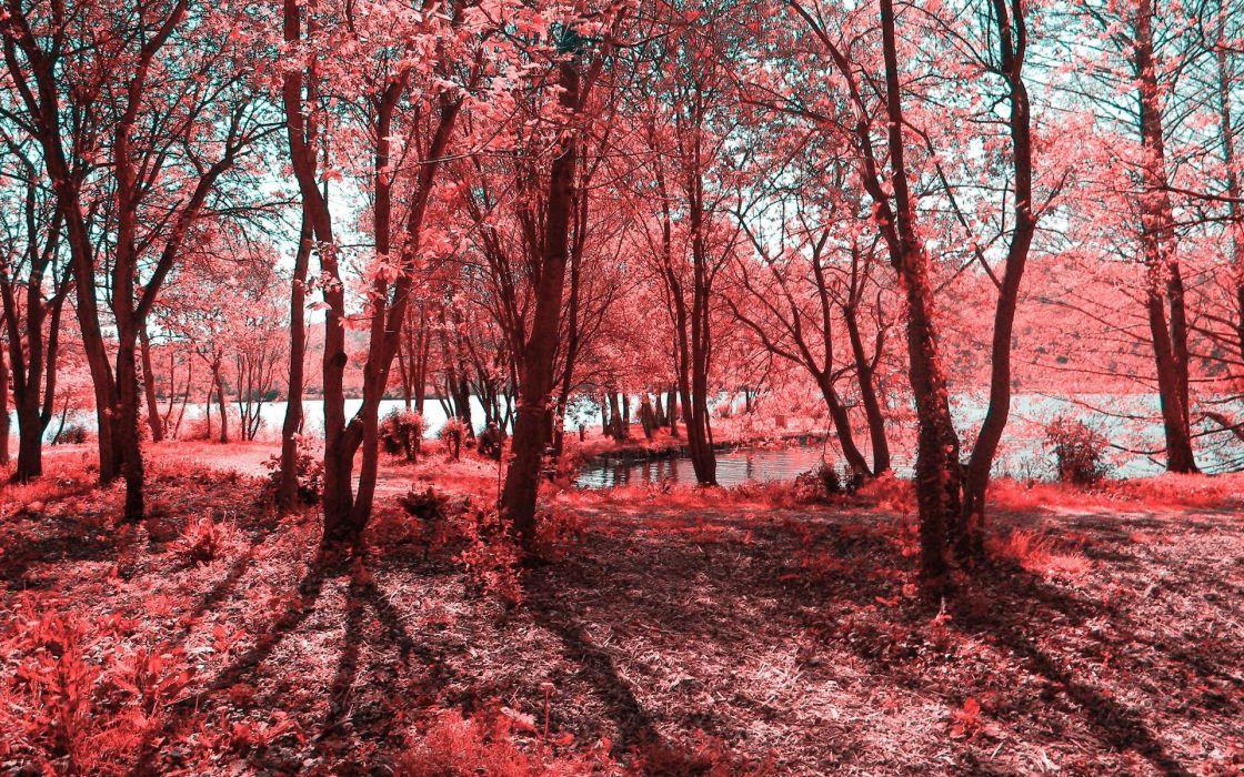 landscapes forest pink wallpaper