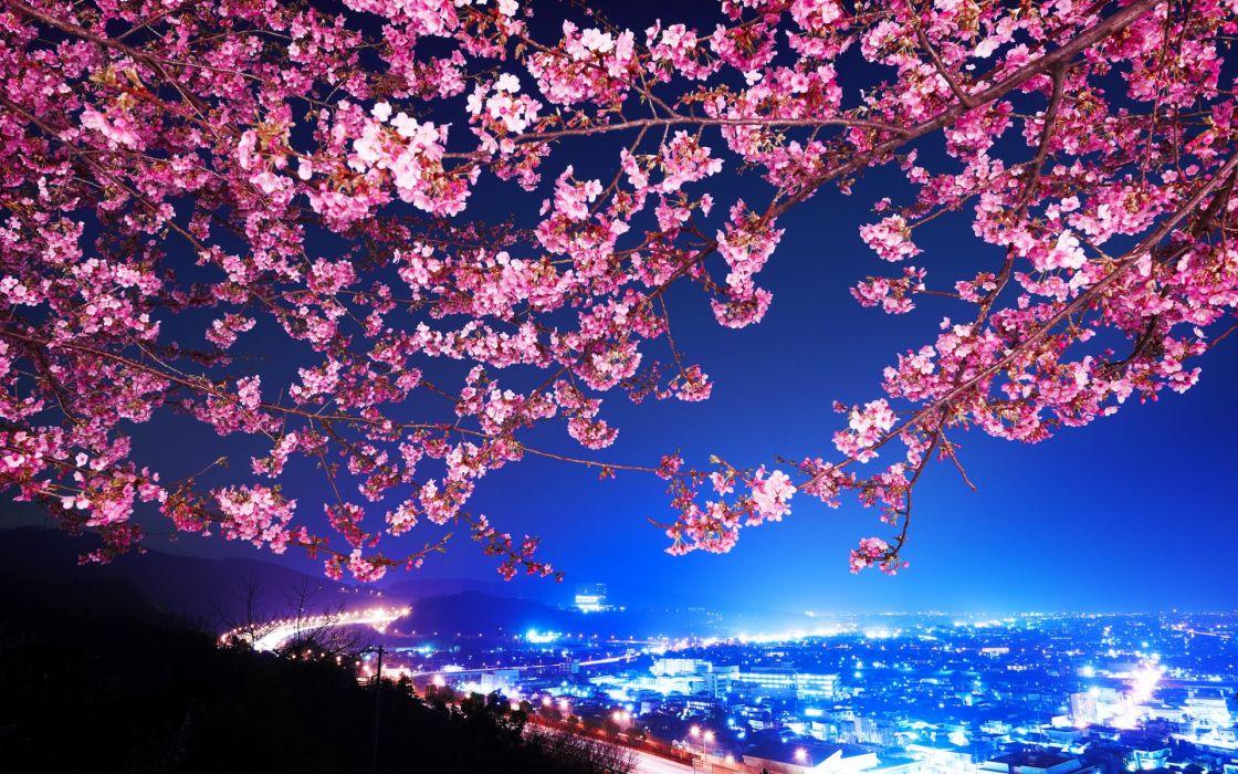 Mimura Japan Sakura Cherry Blossom Highway City Night Trees Flowers