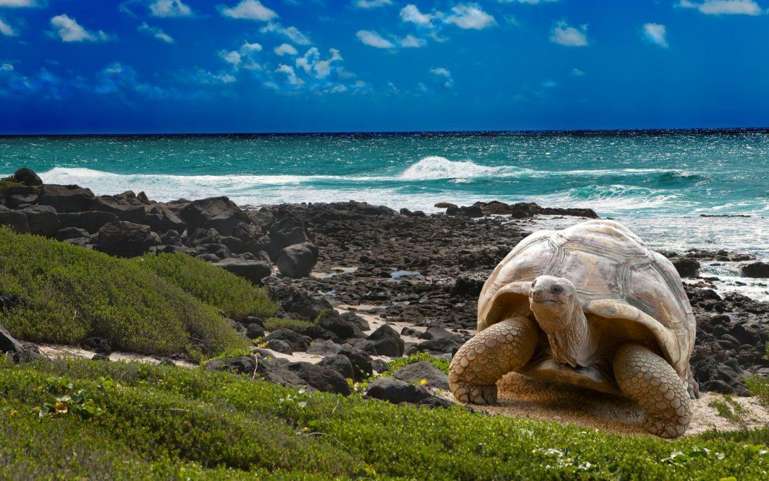 turtle beaches ocean wallpaper