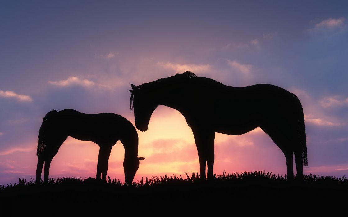 art horses foal sky sunset wallpaper