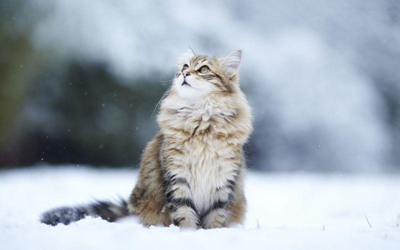 cats humor winter snow flakes wallpaper