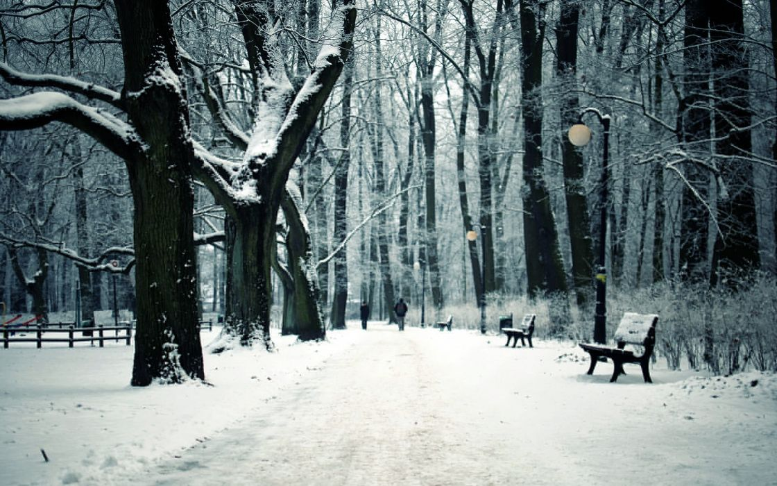 path trail winter snow trees forest bench wallpaper