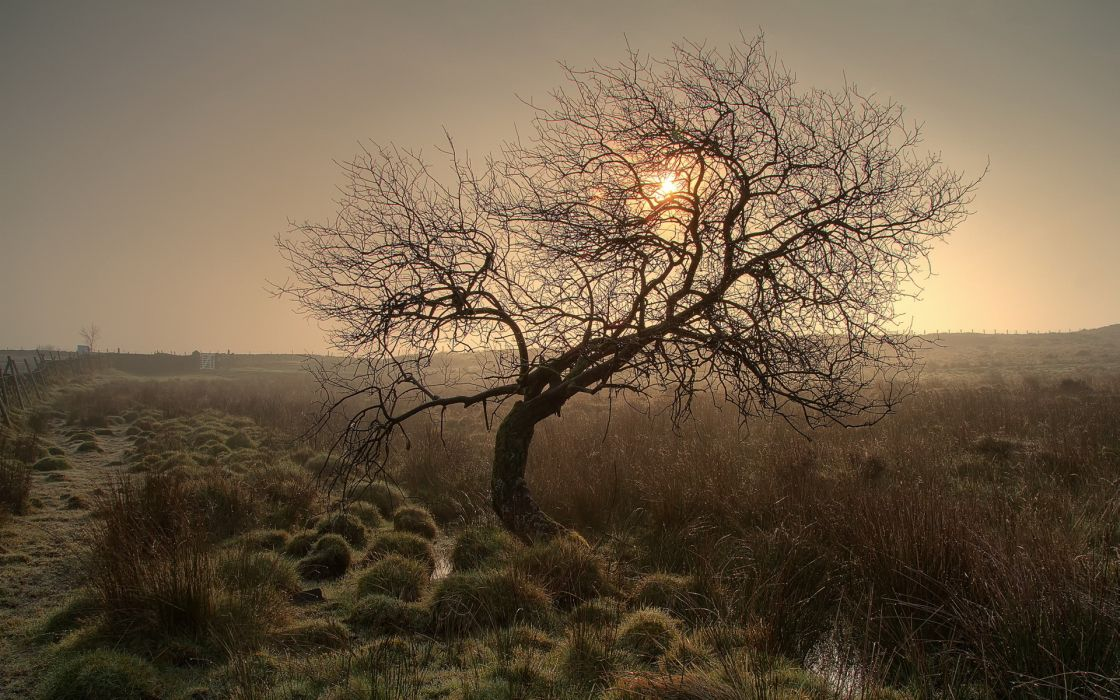 trees sunset sunrise wallpaper