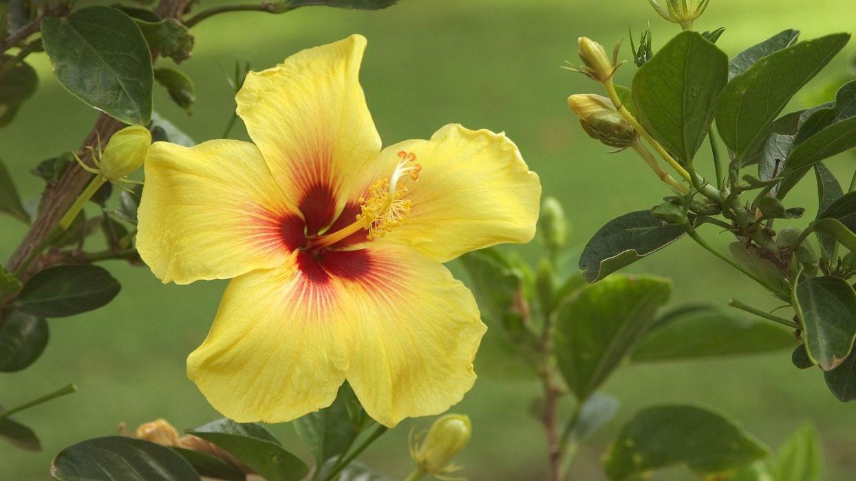 plants yellow wallpaper