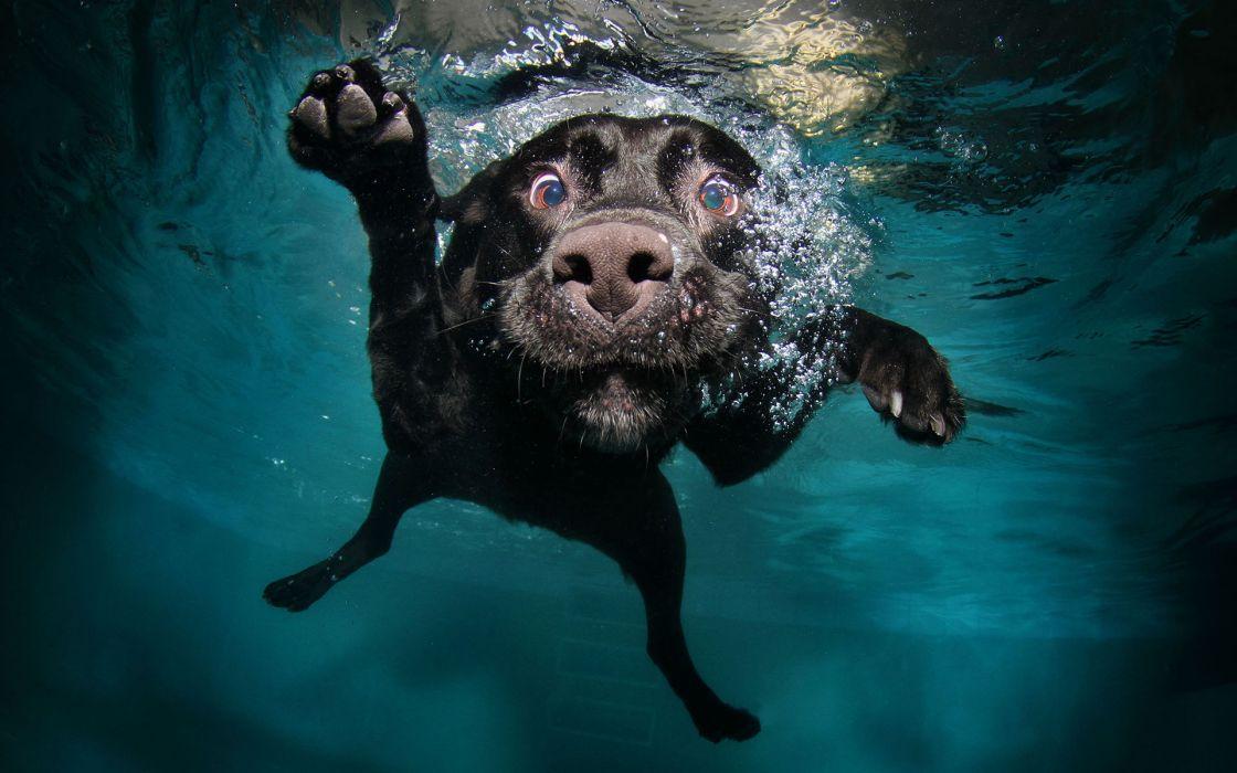humor underwater eyes water wallpaper