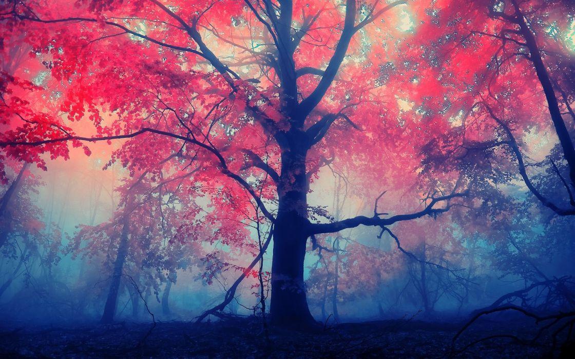 landscapes forest autumn fall leaves fog wallpaper
