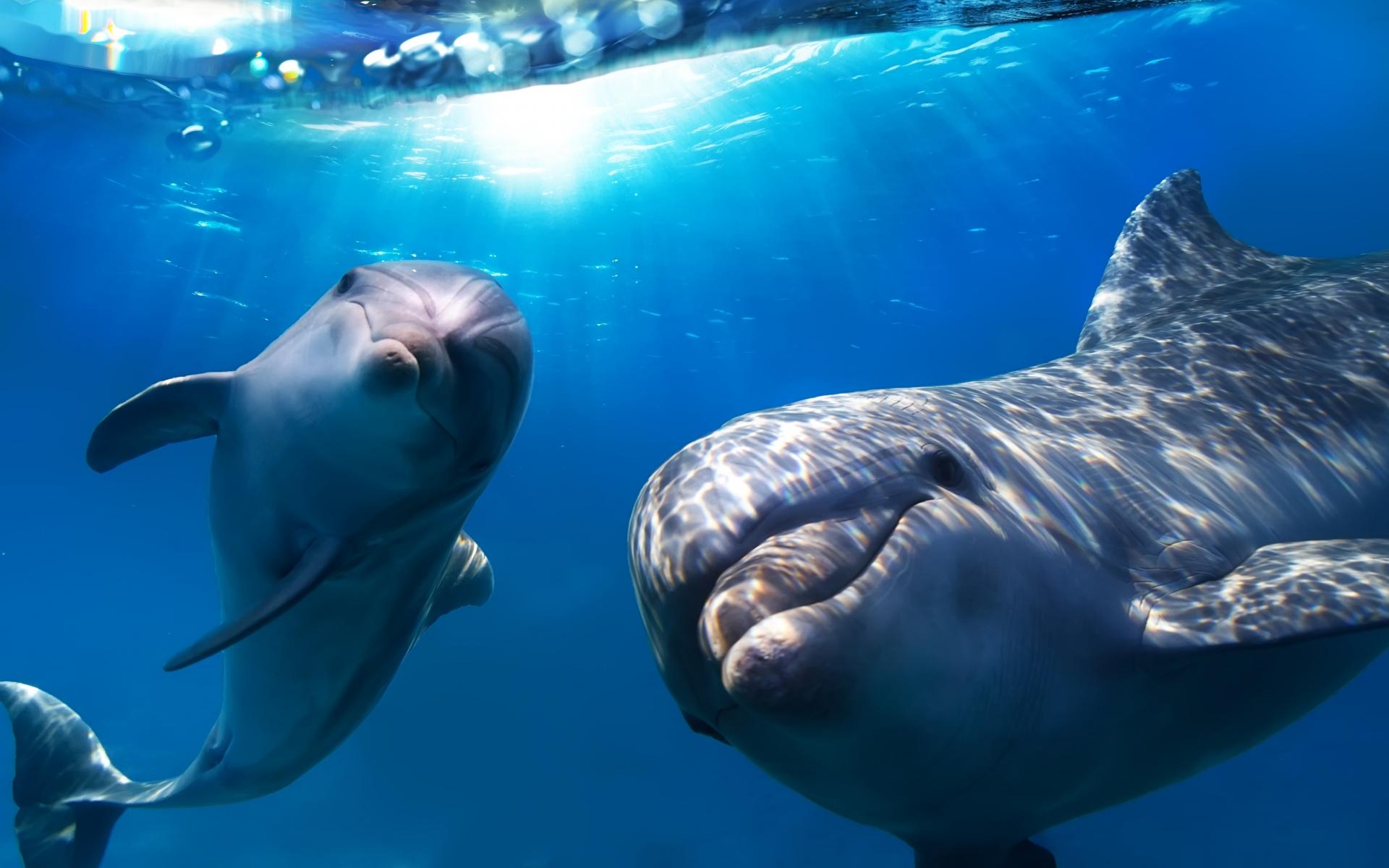 Dolphin Underwater Wallpaper