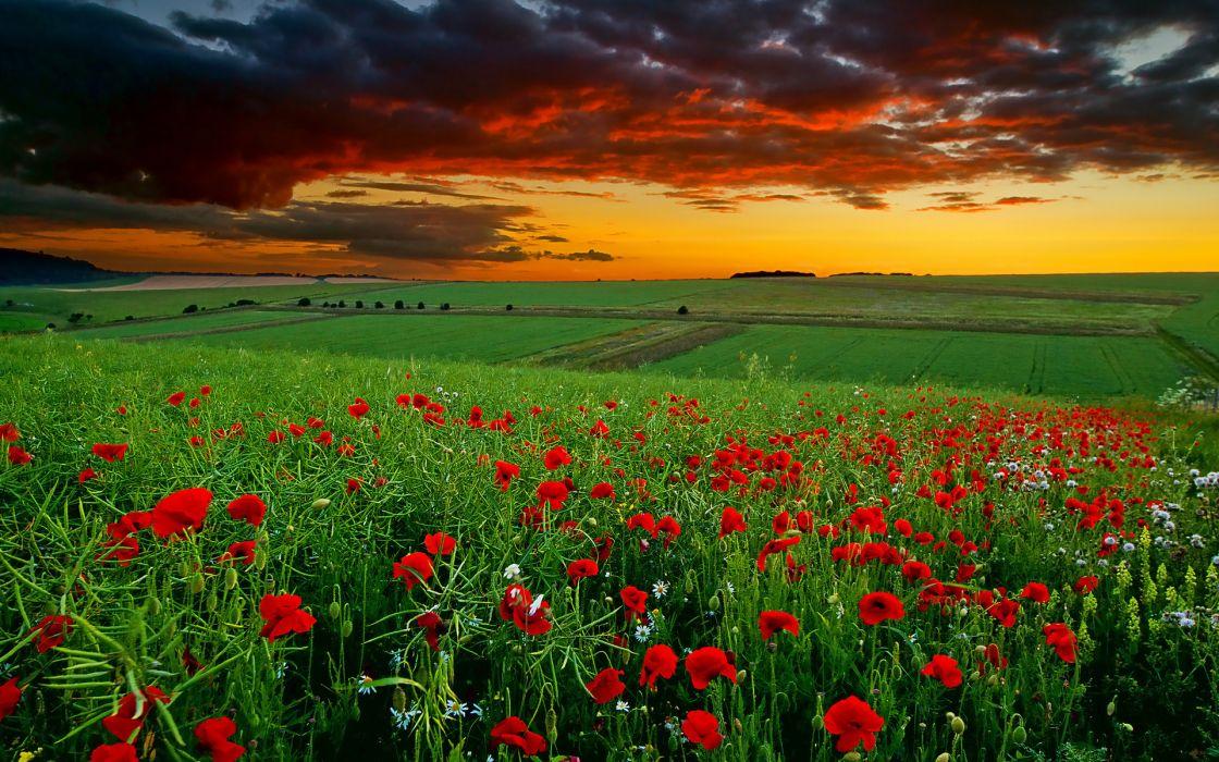 poppies field sunset clouds daisy flowers sky wallpaper