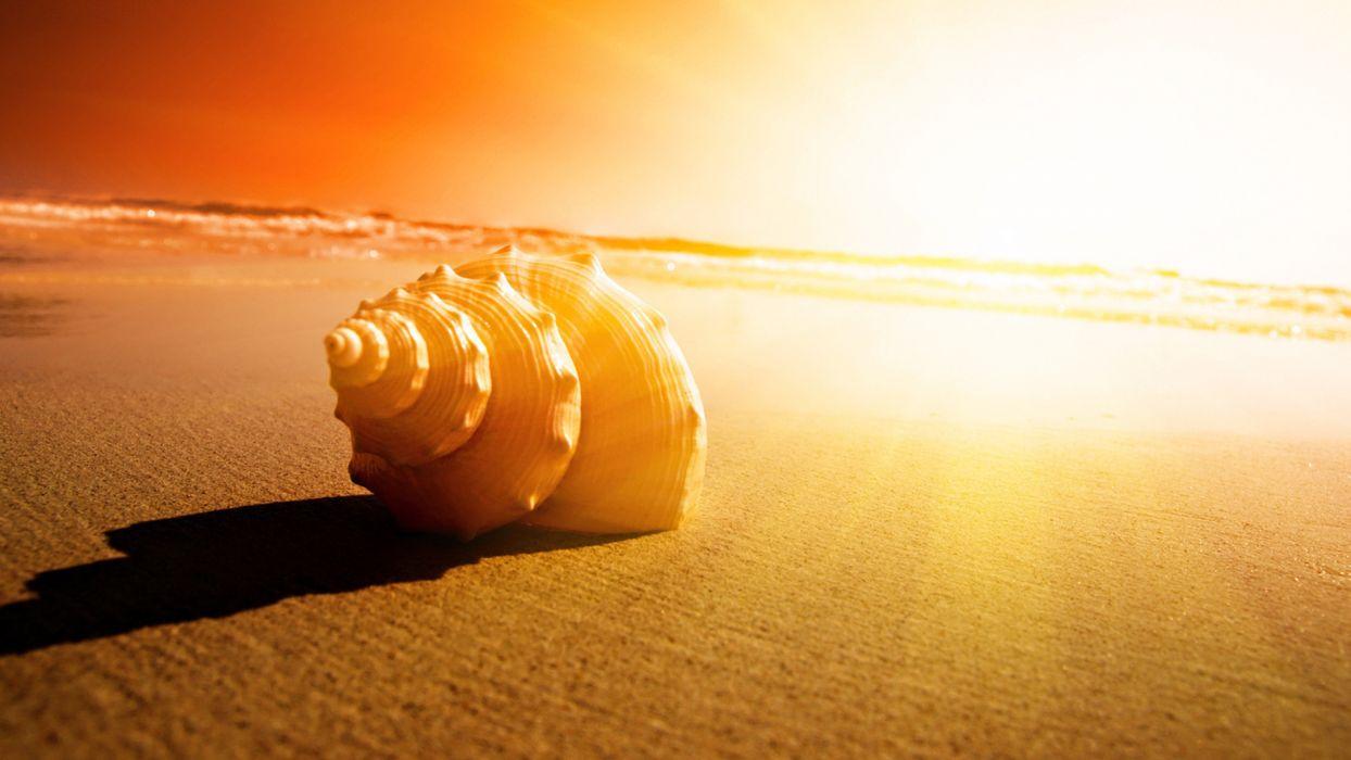 shell sand ocean sunset sunrise wallpaper