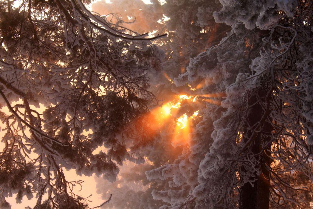 winter forest sunset sunrise wallpaper