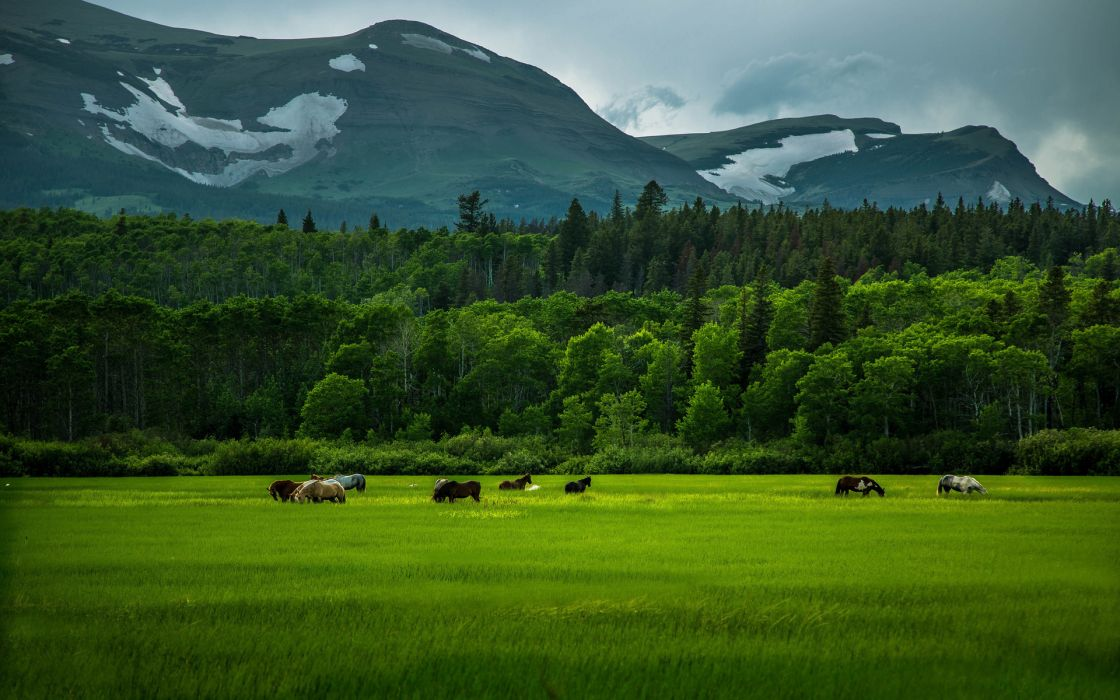 horses trees forest mountains sky wallpaper