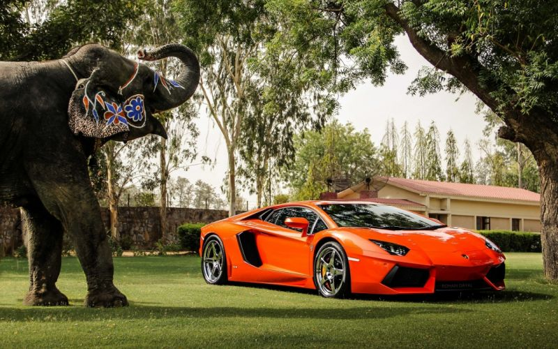 lamborghini aventador lp700-4 supercar exotic elephant wallpaper