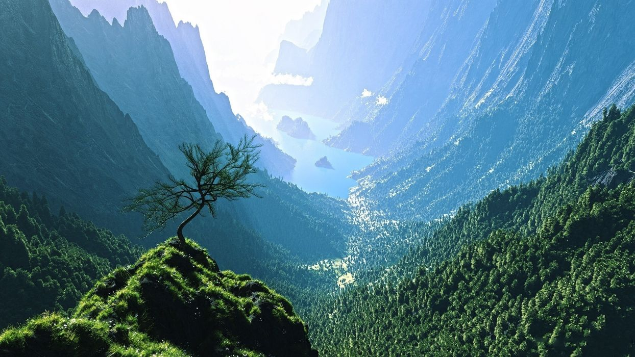 cg digital art 3d trees forest jungle wallpaper