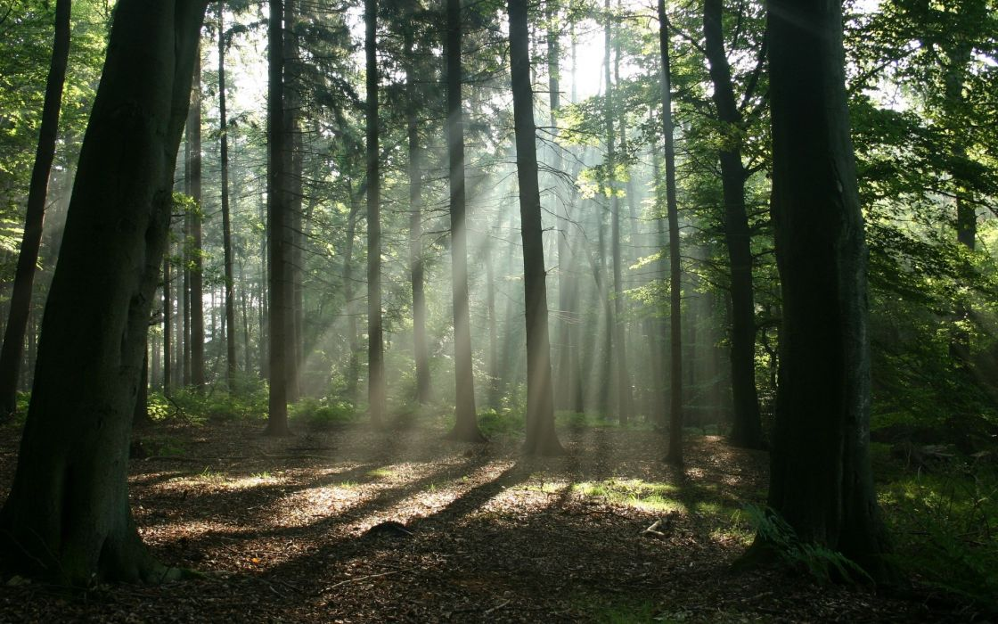 landscapes forest sun rays wallpaper