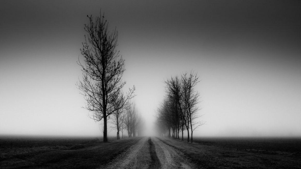nature landscapes trees fog black sky mood wallpaper