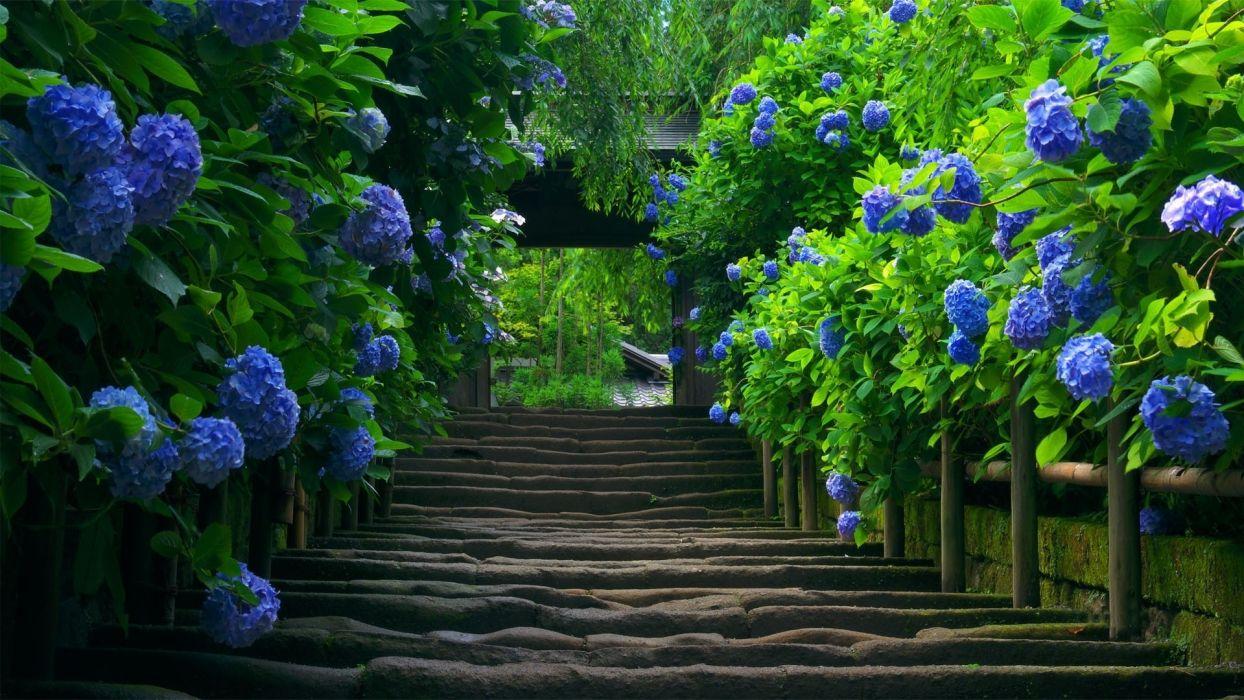 stairs garden plants gate arch wallpaper