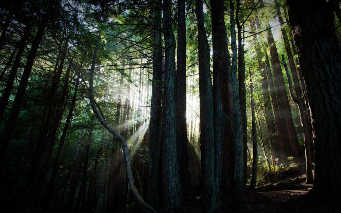 landscapes forest sun beam ray light filter wallpaper