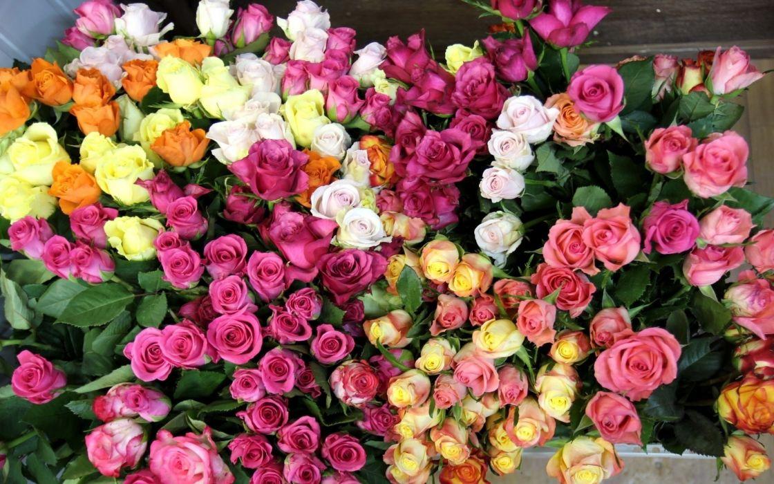 bouquet wallpaper